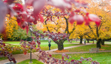 Fall in the Quad, University of Washington Seattle campus, October 2013. Photo by Katherine B. Turner